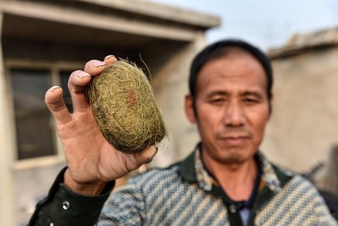 Фермер вспорол брюхо свинье и нашел там предмет, который принесет ему миллионы!