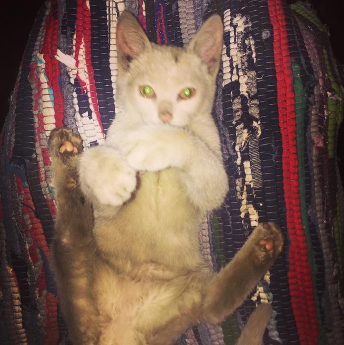 Ребята из автосервиса помогли котенку, а через 2 дня малышка спасла 3 жизни!