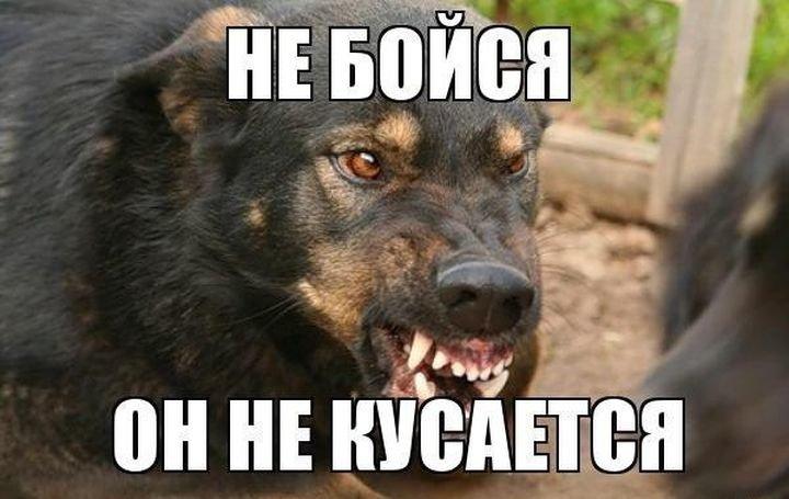 О бродячих собаках авто, животные, зоошиза, кошки, новости, собаки, статья
