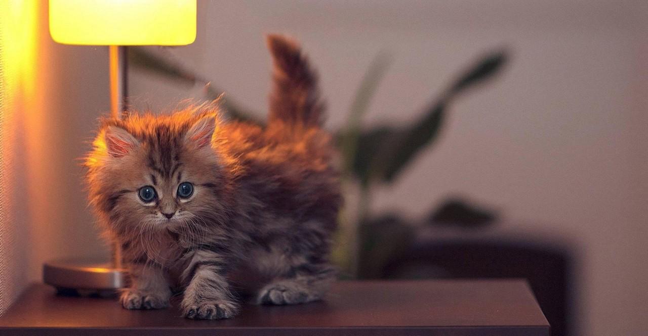 Интересные факты о кошках. Домашние кошки: факты из жизни