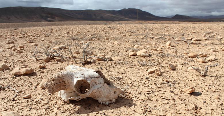 Уже через 5 лет Земле грозит вымирание животных, сравнимое с вымиранием динозавров