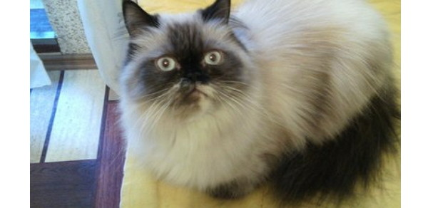 А это глаза мамани, когда показал ей, как поживает её сынок... xD животные, кот, отдых