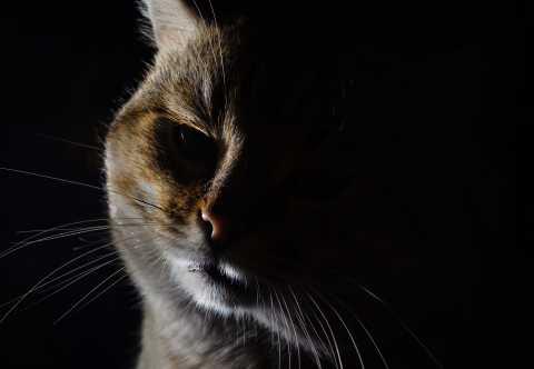 Собаки превзошли кошек в привлекательности мимики