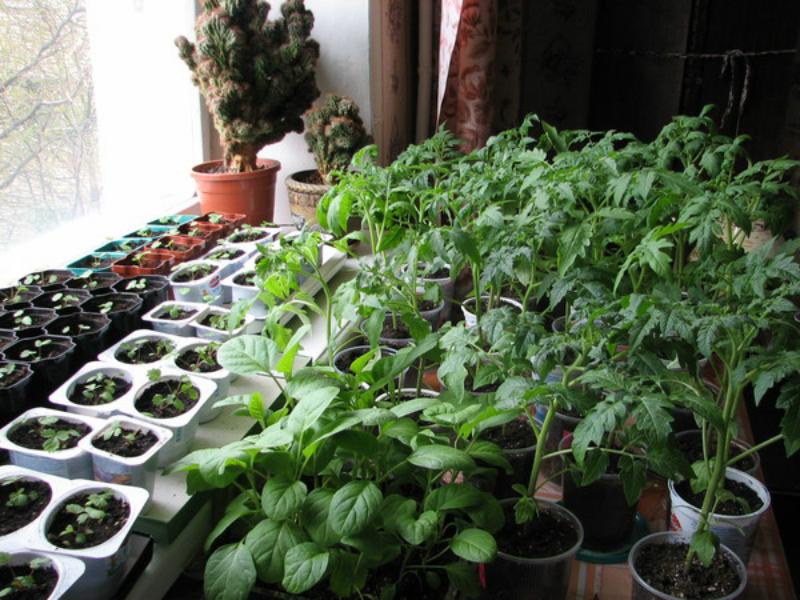Все для выращивания рассады на подоконнике 437