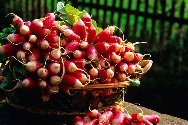Весенний редис. Как вырастить сочные и яркие корнеплоды?