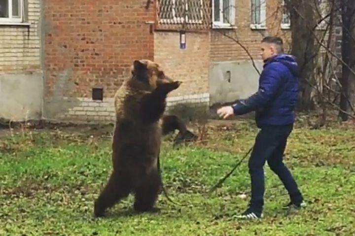Полицейские в Таганроге ищут мужчину, который выгуливал медведя во дворе