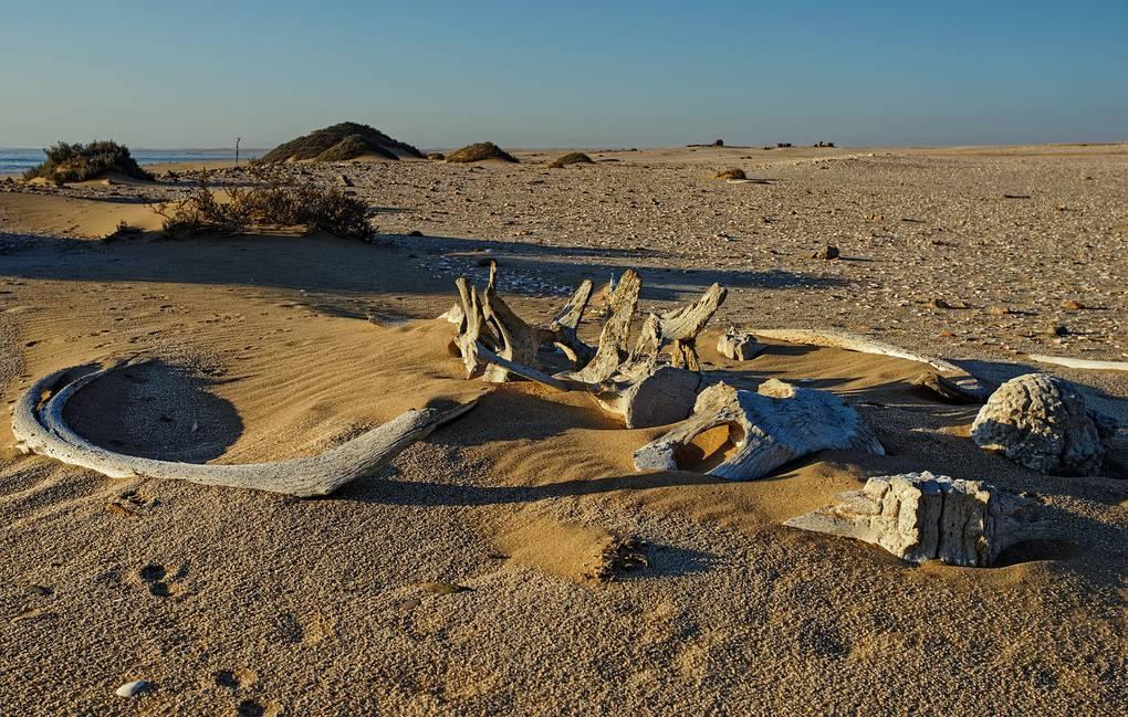 Палеонтологи нашли «потерянное звено» эволюции китов