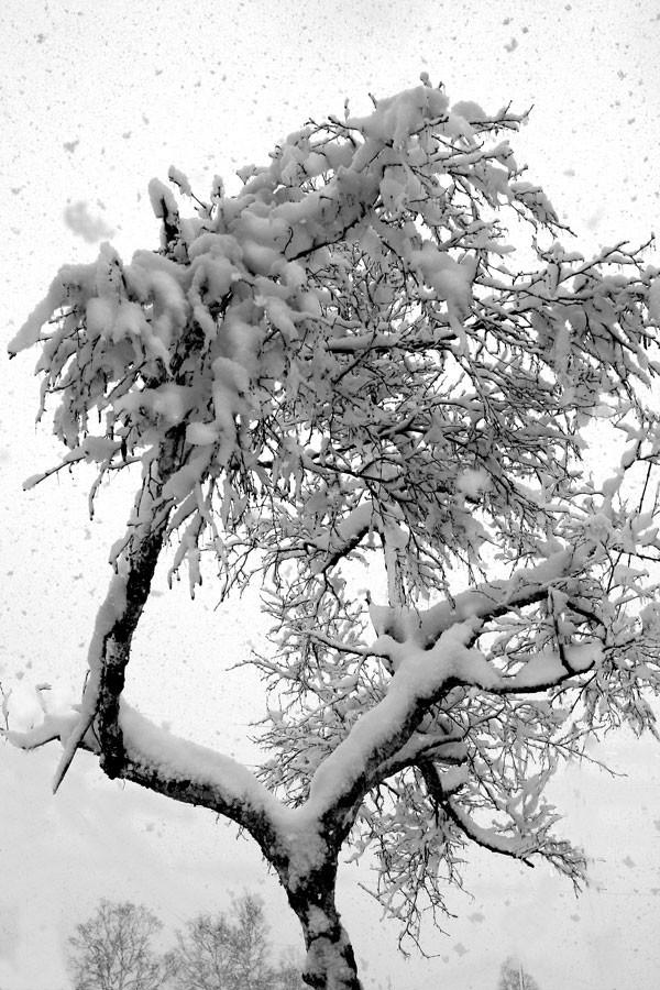Природа Сахалина  Природа Сахалина, картинки, красиво