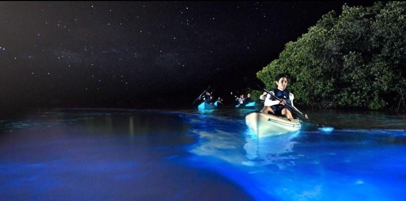7 мест на Земле для изучения феномена биолюминесценции
