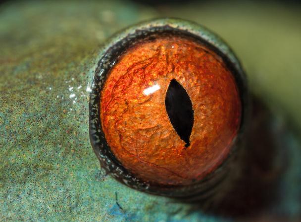 Чьи это глаза? ТЕСТ