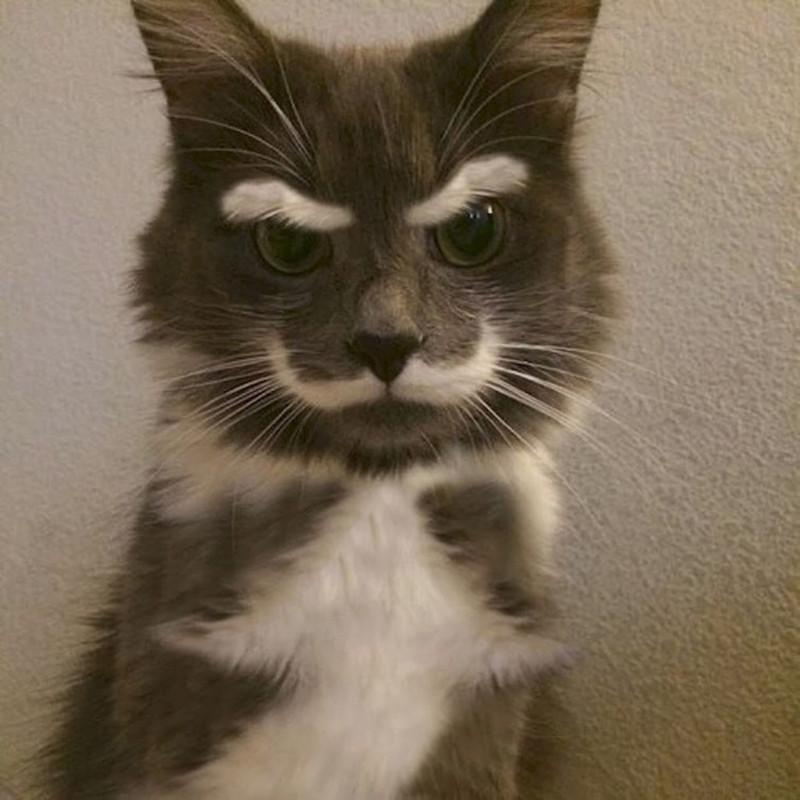 Коты-чемпионы по необычности окраса коты, кошки, юмор