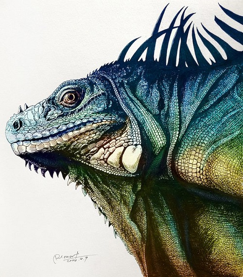 Iguana. Realistic Illustrations by RLoN Wang