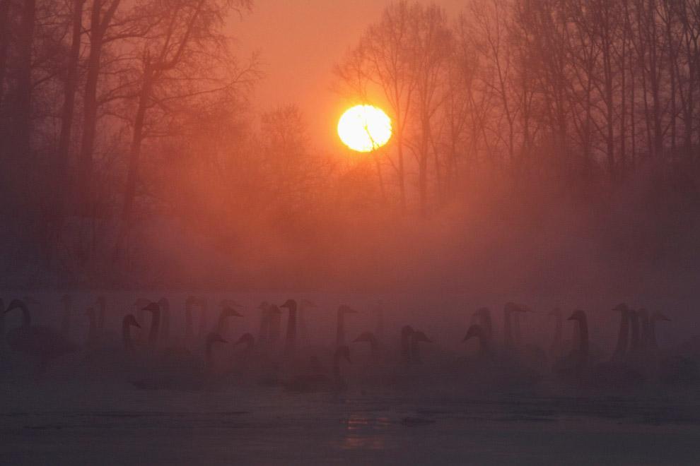 Лебединое озеро в Алтайском крае