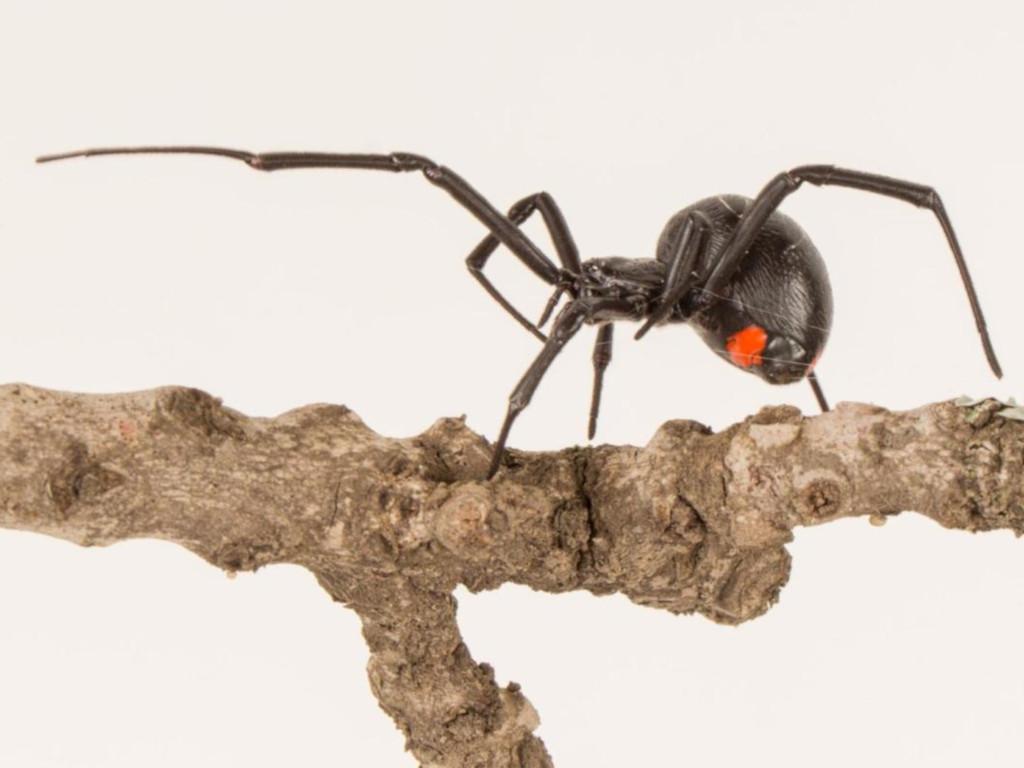 Нового ядовитого гиганта-паука открыли ученые. Видео