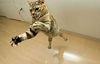 Кошки и Котята 15