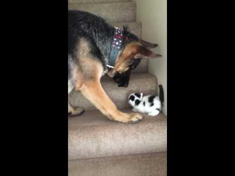 Котенок не мог подняться по ступенькам. Посмотрите, каким образом ему помог этот пес!