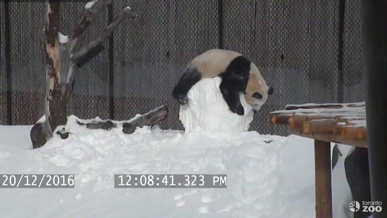 Картинки по запросу панда и снеговик