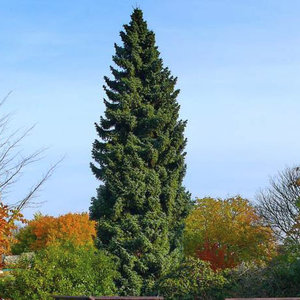 Какие бывают хвойные деревья и кусты, названия и фото