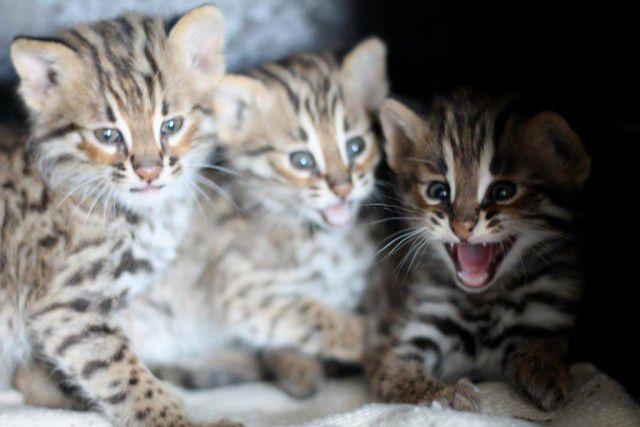 Котята в духовке котята, жизнь, сирота