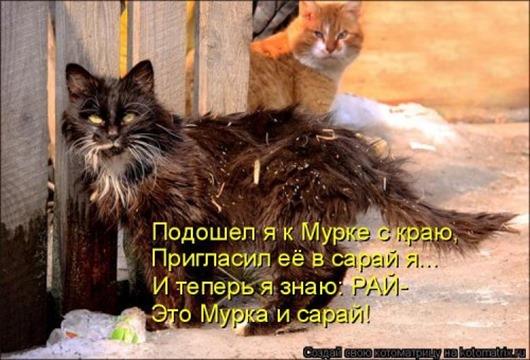 1489789894_svezhaya-kotomatrica-28