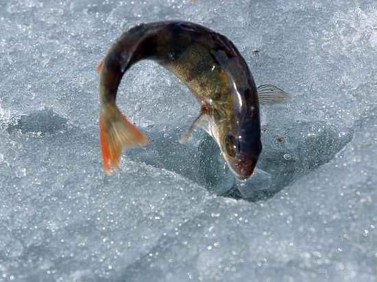 """""""Ловись рыбка и большая и маленькая.."""": В Совфеде предложили сделать платной всю рыбалку в России"""