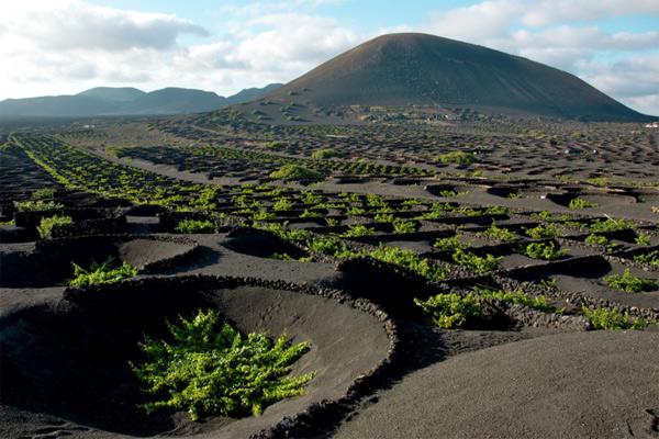 5 самых экстремальных виноградников в мире