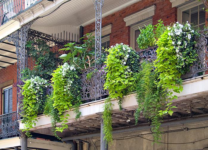 Какие растения растут на балконе.
