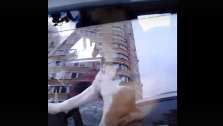 Поющий за рулем пёс из Брянска стал звездой интернета