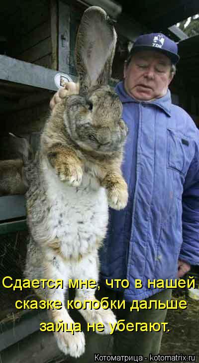 Котоматрица: Сдается мне, что в нашей  сказке колобки дальше зайца не убегают.