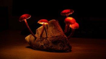 МАСТЕРИЛКА. Ночник «Сказочный лес»