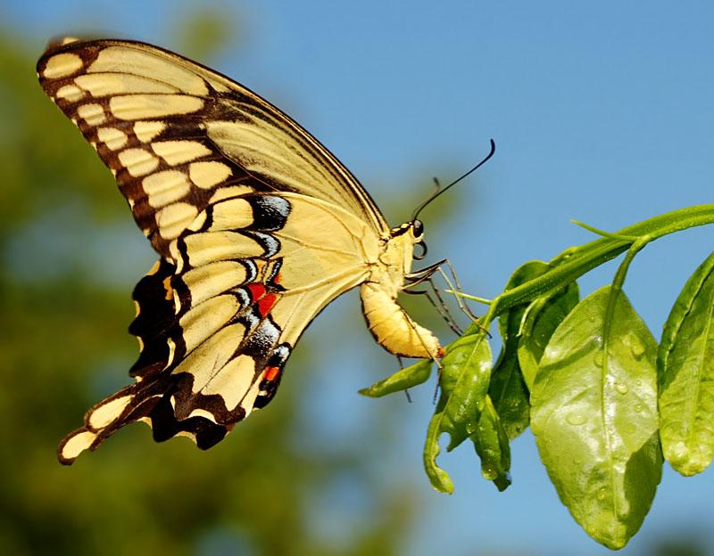 Невероятные бабочки