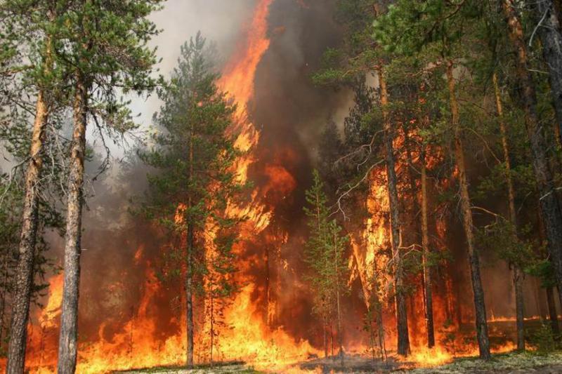 Амурские охотники помогли тушить лесные пожары
