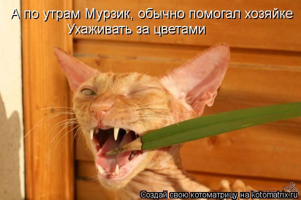 Котоматрица: А по утрам Мурзик, обычно помогал хозяйке Ухаживать за цветами