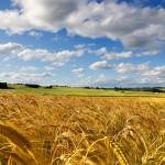 Большой аграрный блеф Украины №2: еще раз о рекордных темпах экспорта зерновых