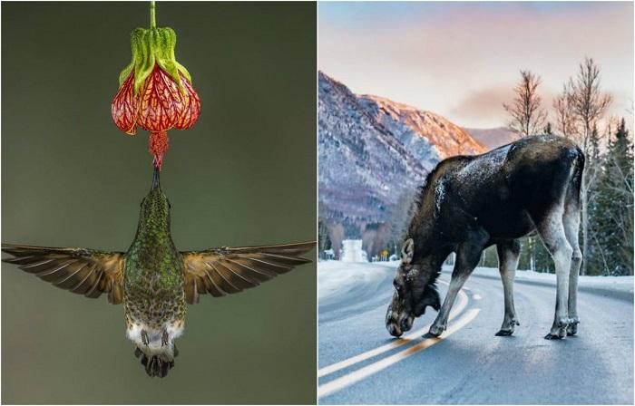 Вдохновляющие снимки природы, созданные участниками фотоконкурса.