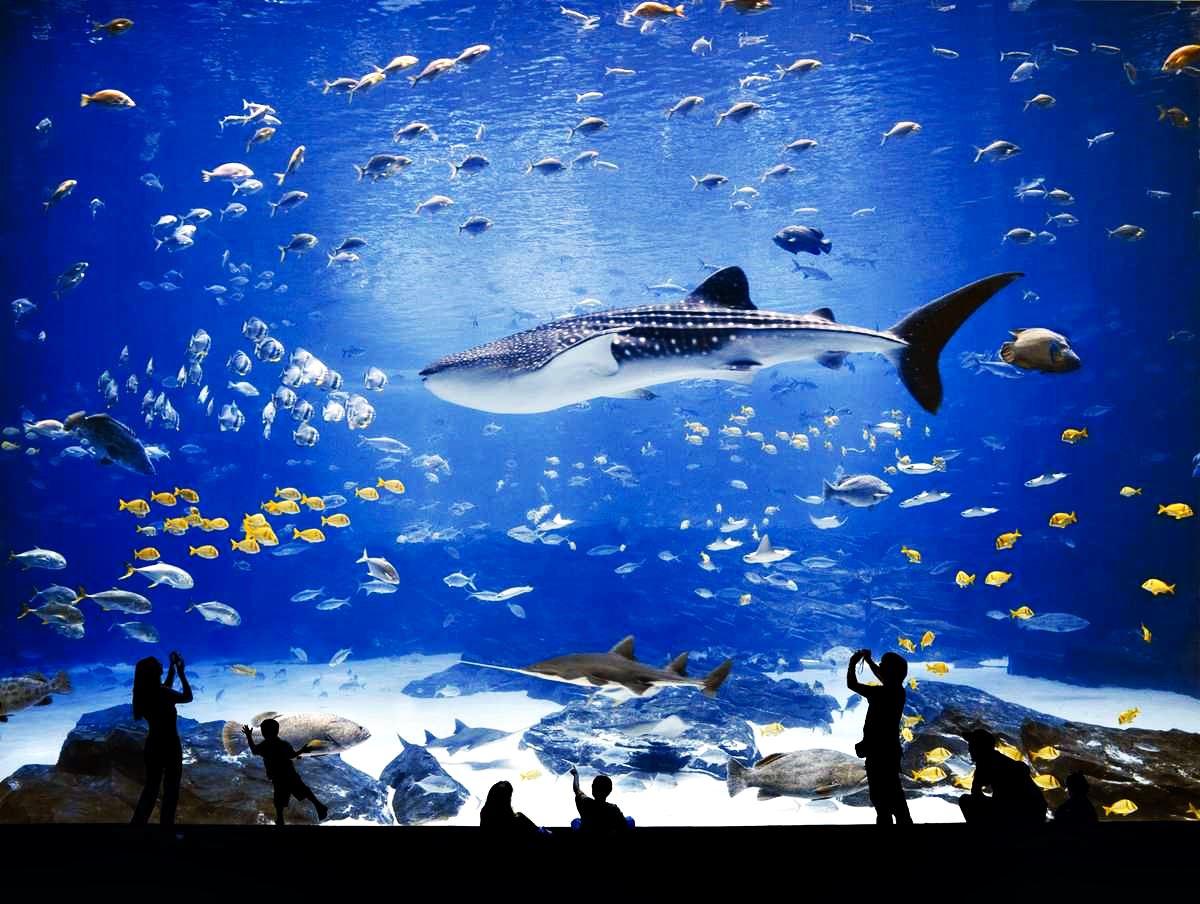 Океанариум Джорджии США. Океаны в миниатюре. Самые известные и крутые океанариумы мира. Фото с сайта NewPix.ru