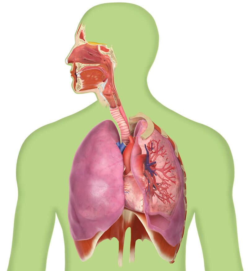 Дыхательная техника саморегуляцииорганизма