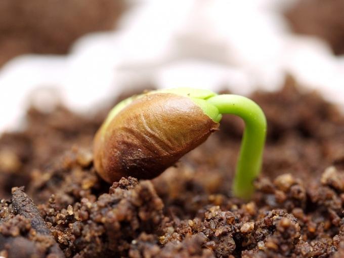 Подзимний посев овощей и зелени для раннего урожая