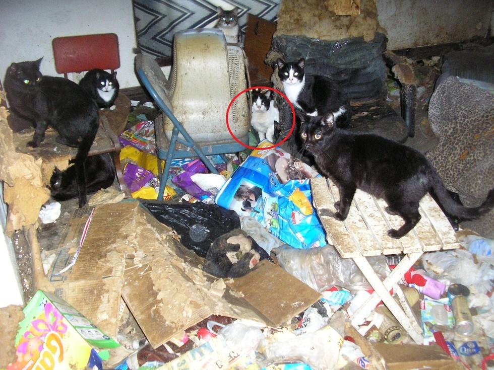 «Он все время чистится». История спасения кота Кабби из кошмарной кучи мусора