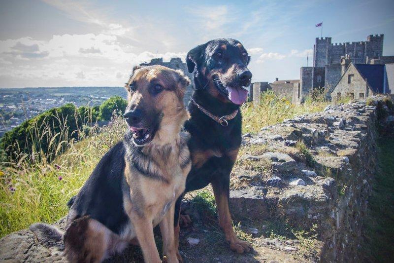 """""""В Дувре много собак, и их здесь любят"""" Дувр, в мире, великобритания, город, жизнь, интересное, путешествия, фото"""