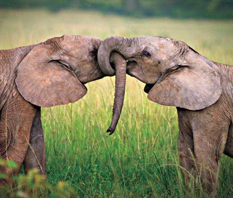 Удивительные подробности интимной жизни животных