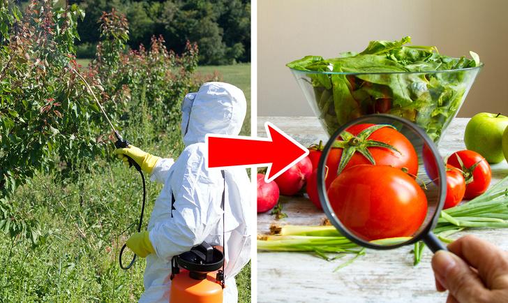 Кому вредно есть помидоры?
