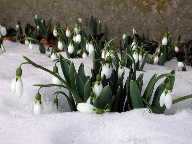 скоро весна