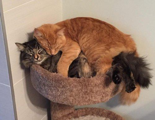 Выросшие из своей кровати, неразлучные Лили и Ренли продолжают спать в ней вместе (9 фото)