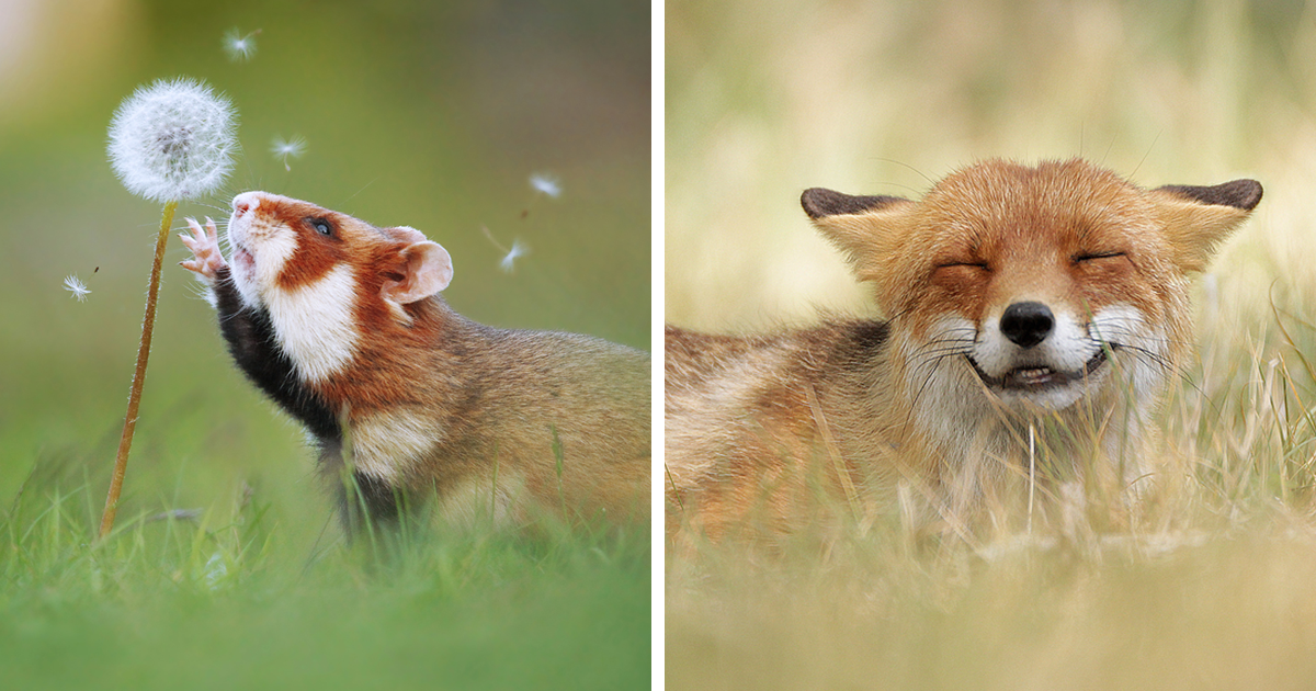 Austrian Photographer Masterfully Captures Wildlife And The Result Is Both Funny And Cute