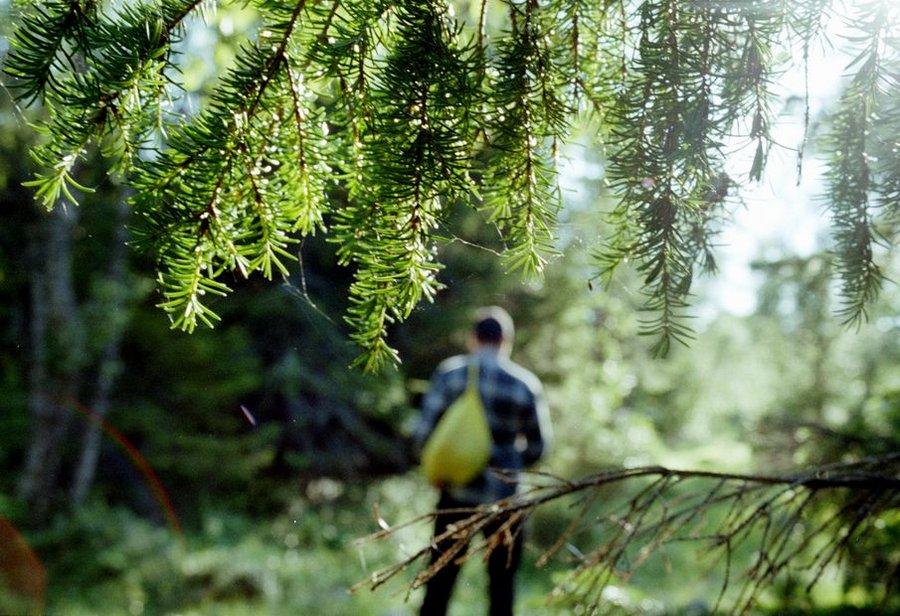 Капканы и ловушки для выживания в лесу