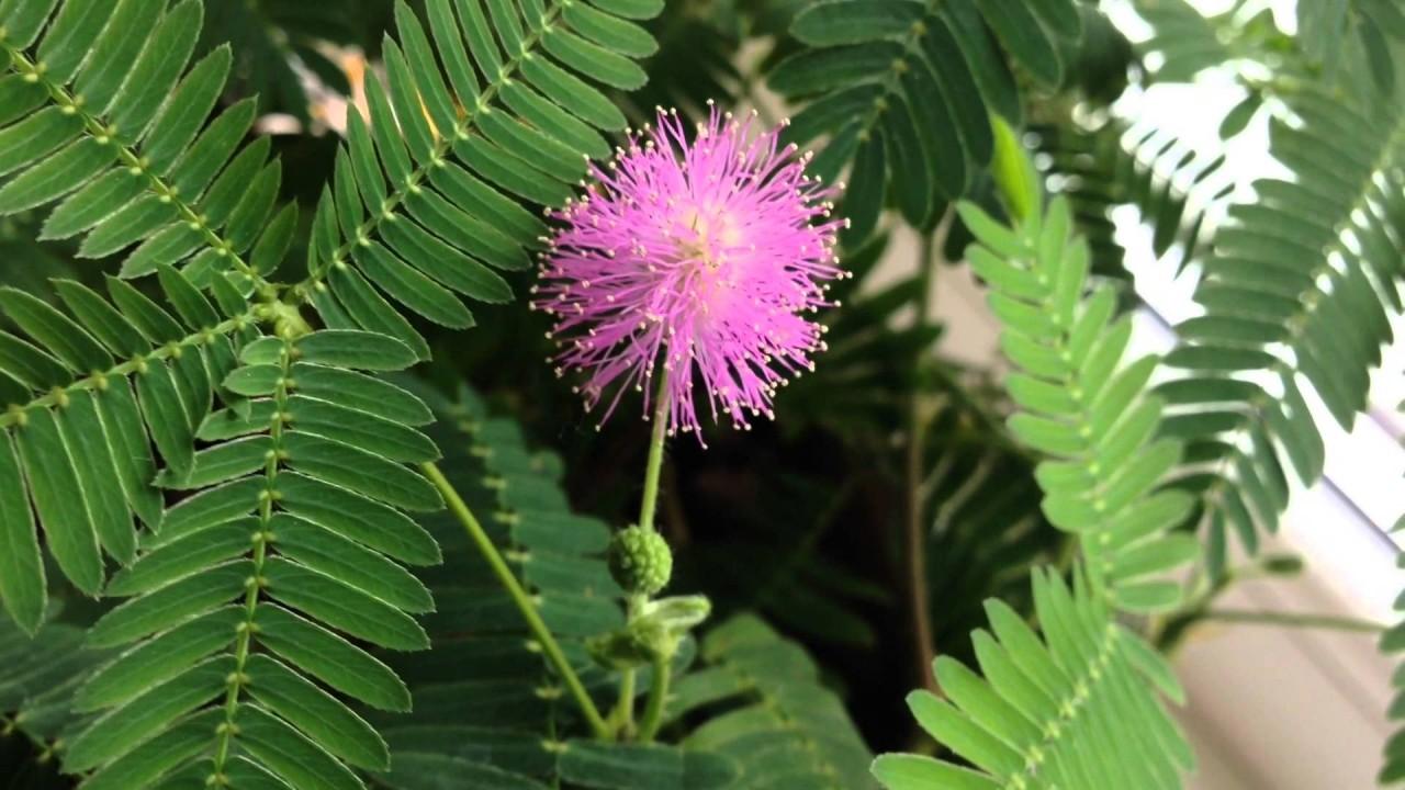 Комнатные растения с необычной листвой