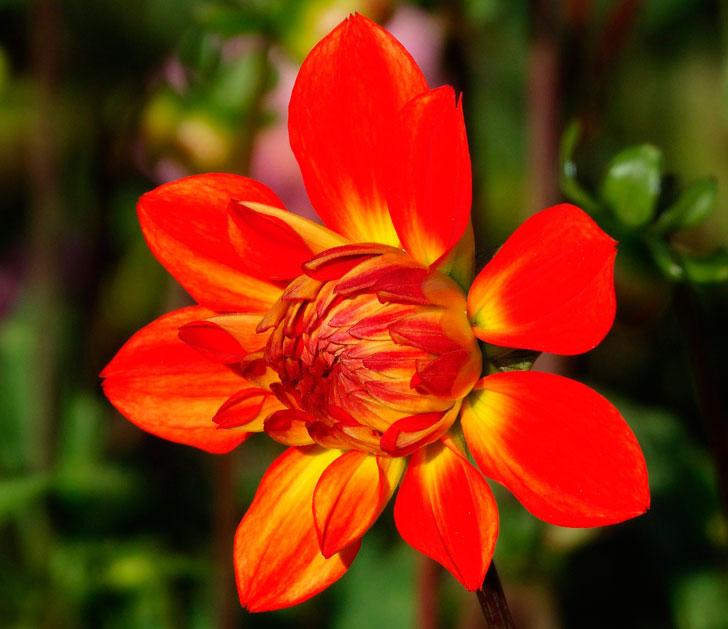 Как найденный в лесу цветок исполнил желание маленького мальчика