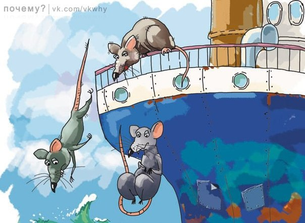 Почему крысы первыми бегут с корабля? (Re.)