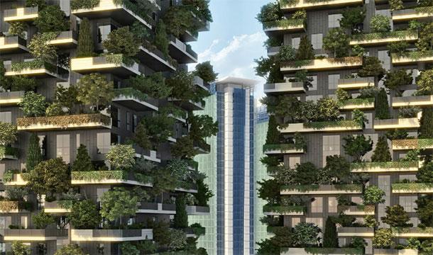 Многоэтажный лес